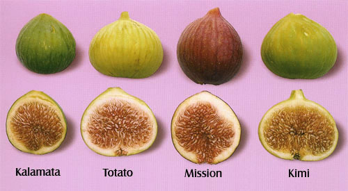 Picture of Figs - #4