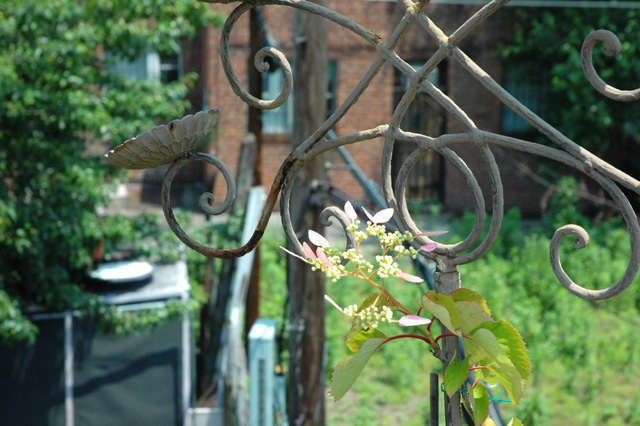 Candelabra Turned Trellis