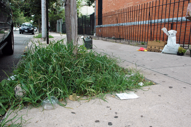 Guerrilla Gardening in Ridgewood Queens