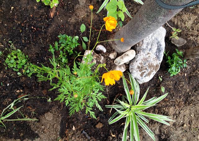 Guerrilla Gardening in Ridgewood Queens