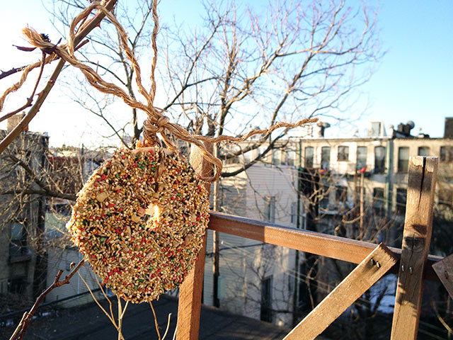 bagel-bird-feeder-diy-2