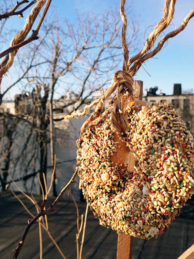 bagel bird feeder