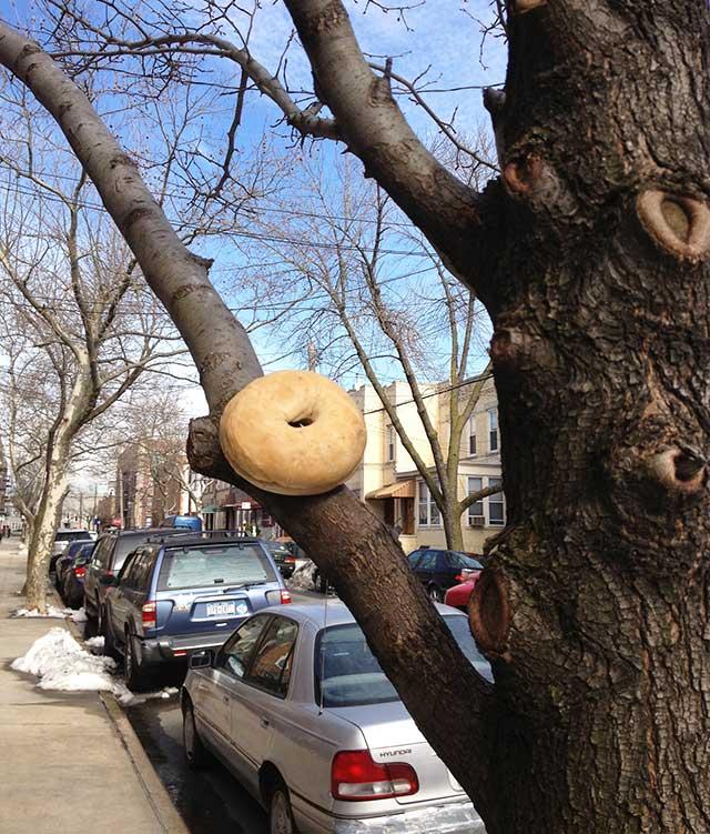 found bagel in tree - Ridgewood Queens