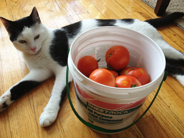 Fiver with tomatoes