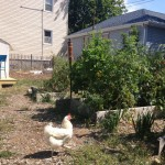 Urban Farm in Rockaway