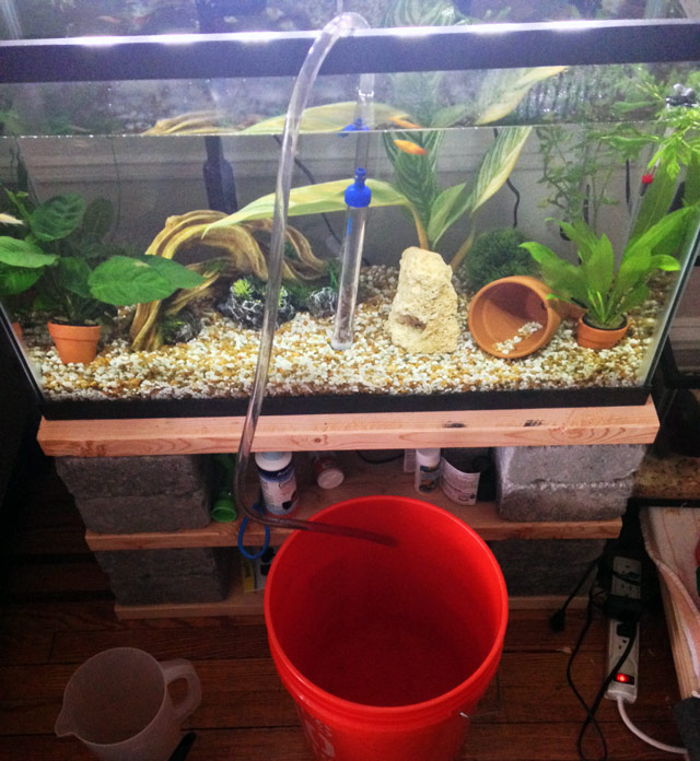 aquarium-water-for-houseplants-2