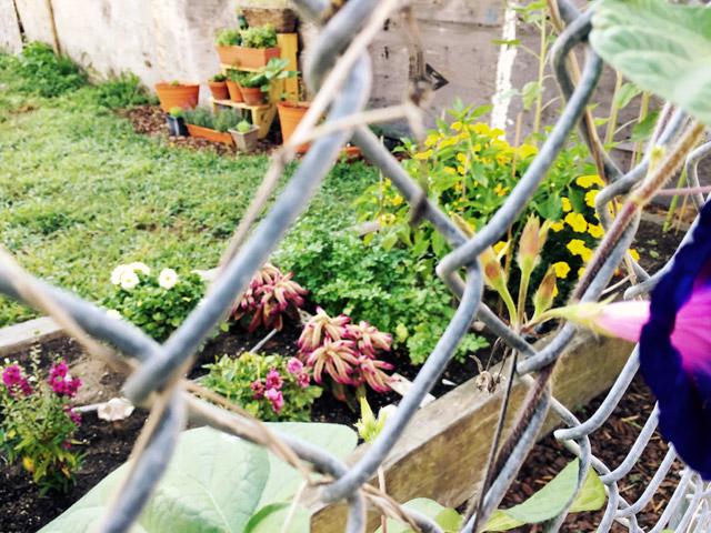b91-community-garden-1