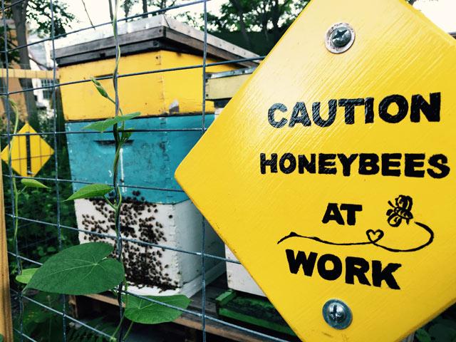 b91-community-garden-bees