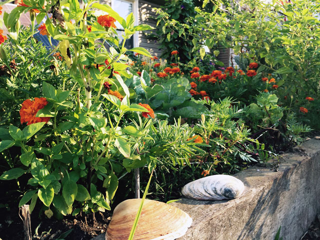 b91-community-garden