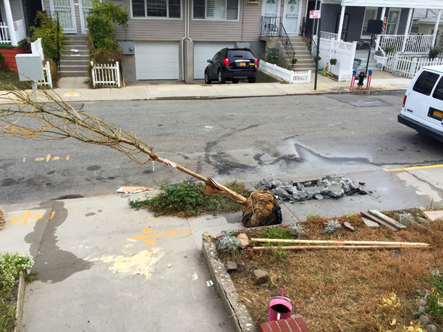 NYC-tree-planting-rockaway