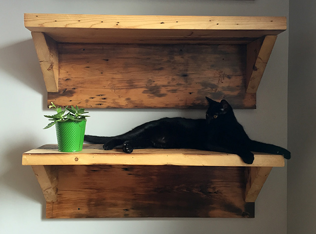 cat-shelf