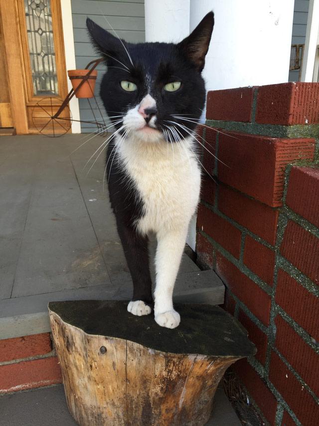 cat rockaway