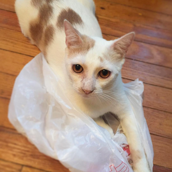 rescure-cat-nyc-tnr