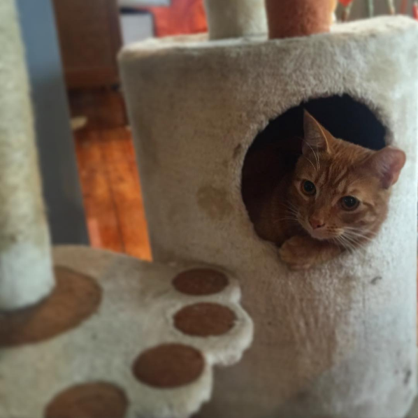 orangecat-catcastle