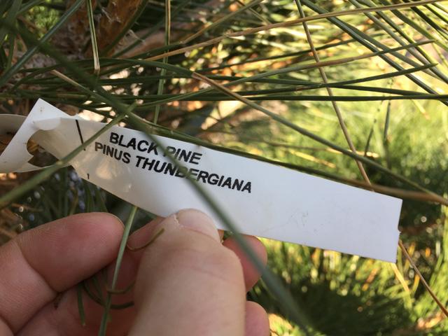 rockaway-tree-planting-3
