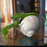sea-shell-planter