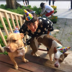 birthday-pitbulls