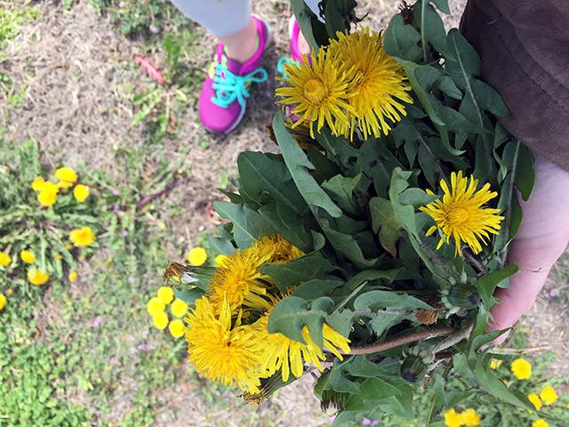 foraging-dandelions-rockaway