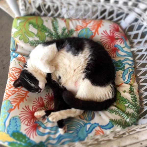 stray-cats-Rockaway
