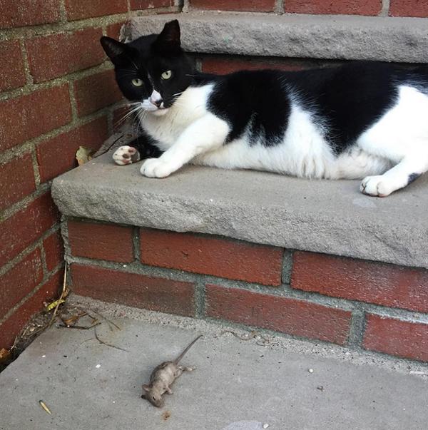 cat and mouse rockaway queens