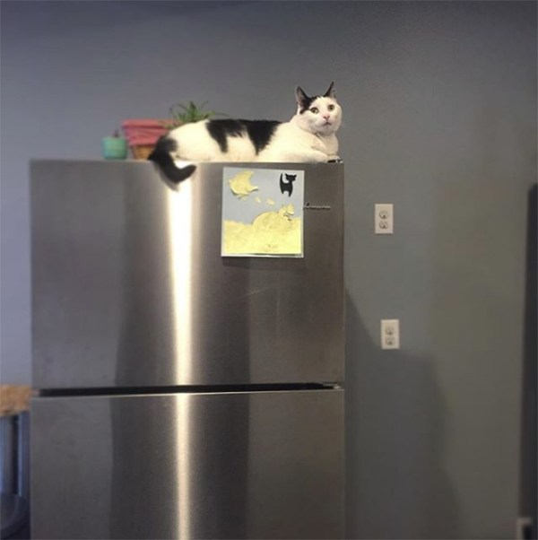 cat on refrigerator