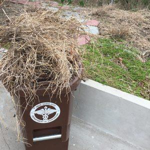 organic-waste-bins-nyc