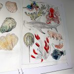 Illustrations-in-the-exhibit-by-Valentina-Gallup
