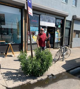 Phil-Cicia,-owner-of-Beer-House,-Inc.-Sweeping-up-ouside-his-storefront-near-the-Goldenrod-plant