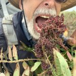 Wildman Steve Brill ready to sample the bitter Winged Sumac. Make pink lemonade with this plant!