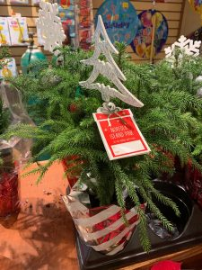 After receiving this plant follow my care instruction in this article. Remove it's decorations after the holiday to reveal a beautiful living tree in need of your attention