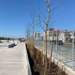 New trees planted at the Beach 91st St. skate park