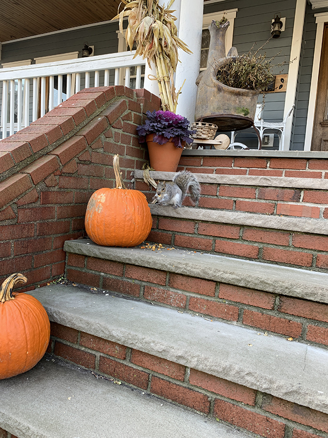 squirrel pumpkin 2