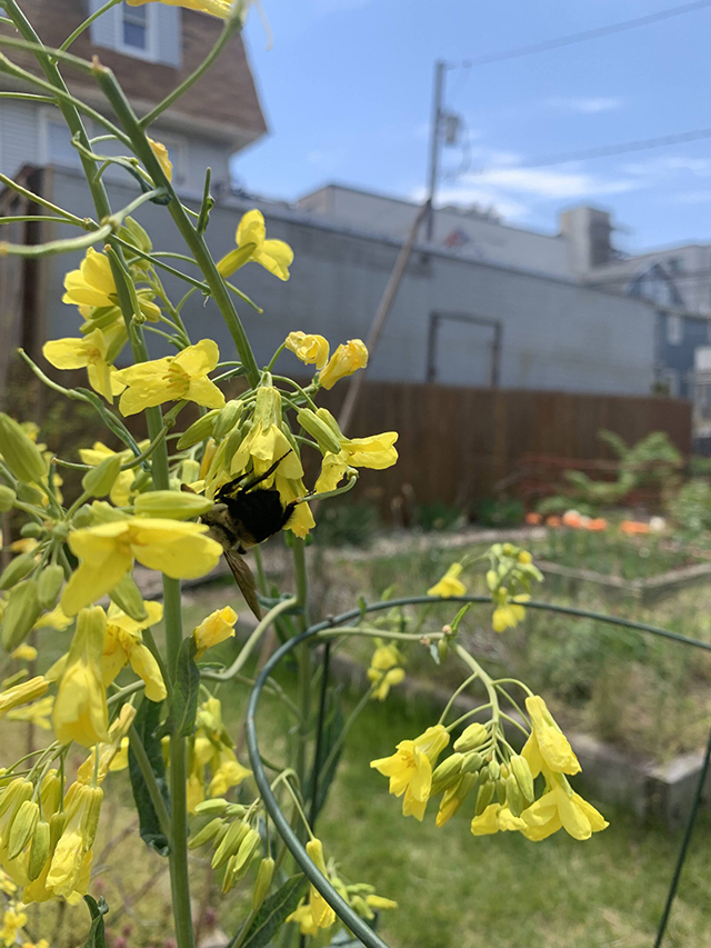 Dont-worry-we-kept-plenty-of-flowers-on-the-plant-for-the-bees-scaled (1)